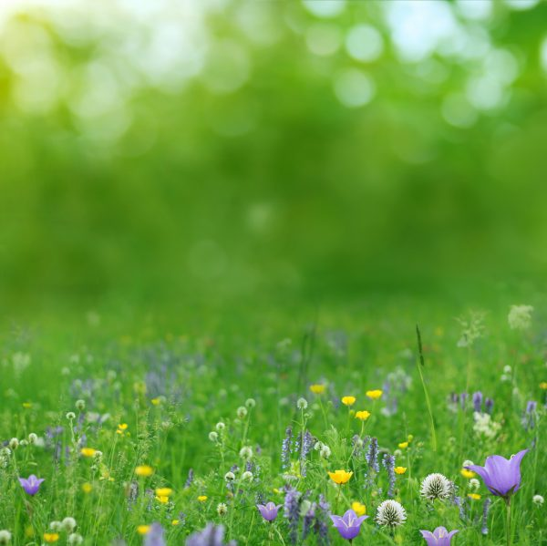 wildlife-meadow-flowers