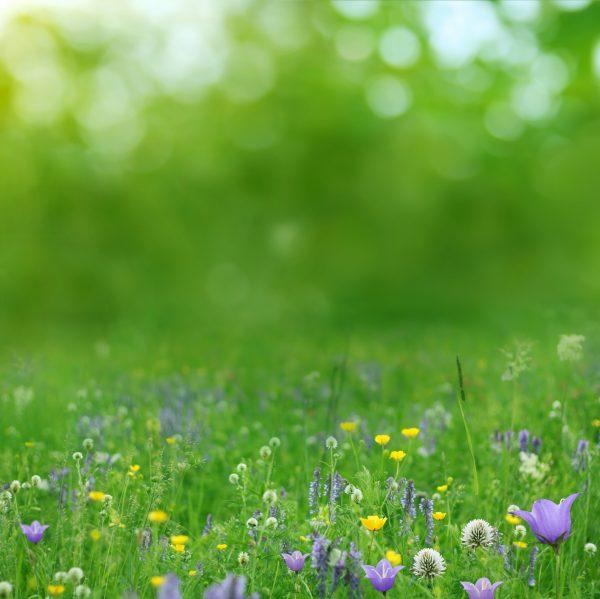 wildlife-meadow-flowers