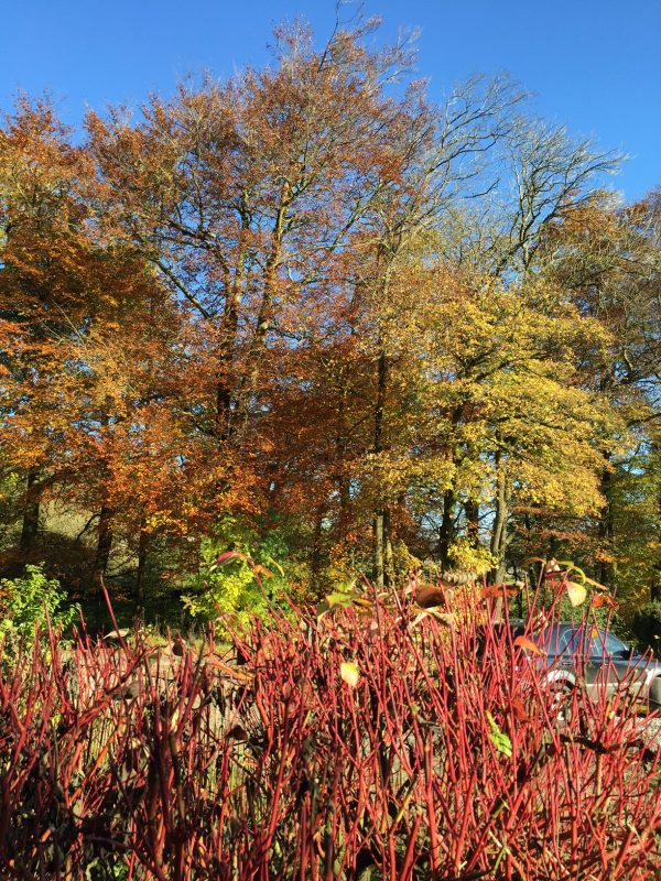 woodland autumn colours 2
